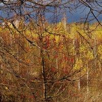 лесные ягоды :: Natalia Mihailova