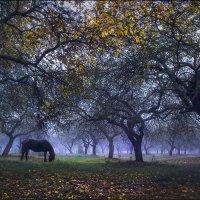 Осенний сад :: Елена Ерошевич