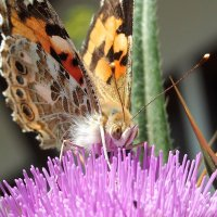 Бабочки летают, бабочки... 4 :: Swetlana V