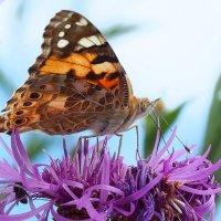 Бабочки летают, бабочки... 2 :: Swetlana V