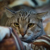 Ты чего на меня смотришь??? :: Дмитрий