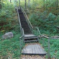 Лестница, ведущая к источнику Св. Онуфрия Великого. :: Наталья