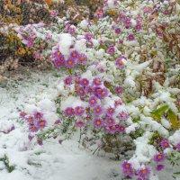 Снег в октябре :: Виталий