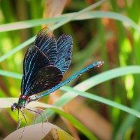 столько крыльев - почти бабочка :: Александр Прокудин