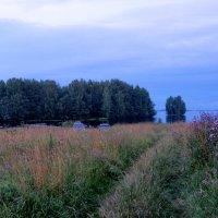 Берег реки Шексны :: Светлана
