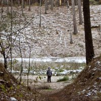 Прогулка по лесу :: Елена Киричек