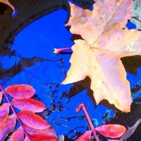 Осенние листья :: Ольга