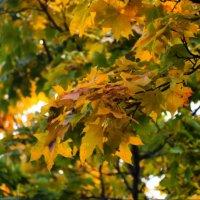 Осень... :: Елизавета Олейник
