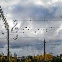 Осенние нотки :: Ринат Валиев