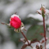Недопетая песня тепла.... :: Tatiana Markova