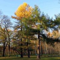 В осеннем парке :: Вера Щукина