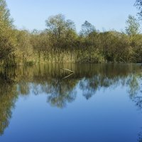 Озеро в лесу :: Игорь Сикорский