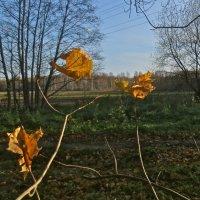 последния листья :: Елена