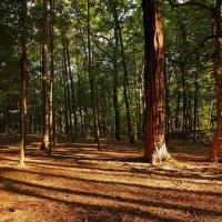 В утреннем лесу :: Alexander Andronik