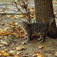 В хороводе кленовых листьев :: Татьяна Смоляниченко