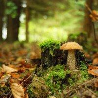 А Осень тихо шла, грибы сажала... :: Елена Kазак