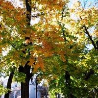 И снова осень во всей ее красе :: татьяна