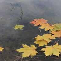 Прощание с осенью! :: Марина Marina