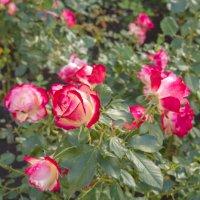 Поздние цветы :: Marina Talberga