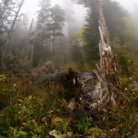 Autumn in the forest with fog :: Александр Плеханов