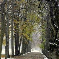 Первый снег  /2/ :: Сергей