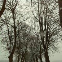 первый снег :: Вася Попкин