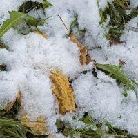 Первый снег-1 :: Александр Петров
