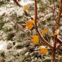 под первым снегом :: Александр Прокудин