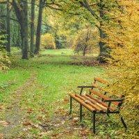 Уголок Ботанического сада :: Владимир Самсонов