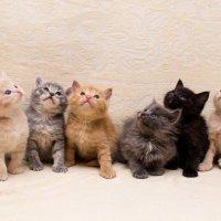 Котятки :: Ксения ПЕН
