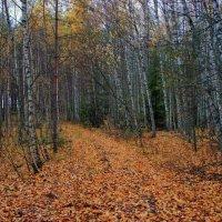 Лес остыл и листья сбросил... :: марк