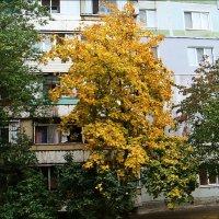 Золотая середина :: Нина Корешкова