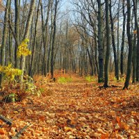 Шурша листвою на осенних тропинках.. :: Андрей Заломленков