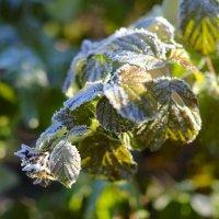 Первые заморозки :: Валерий Шибаев