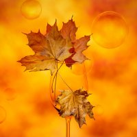 Осень :: Larianna Holm