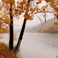 Осень  на  Томи :: Наталья Казанцева