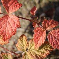 Осень окрасила листья... :: Cветёлка ***