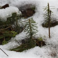 Мокрый снег :: Aнна Зарубина