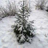 Маленькой елочке холодно :: Liubov Garkusha