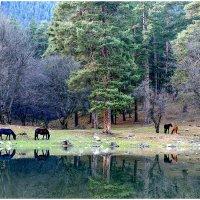 Теберда.Озеро Каракель. :: Аnatoly Gaponenko