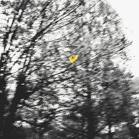 ...и Осень уходит :: Александр Липецкий