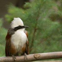 Птичка на жердочке :: Лада