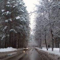 Сегодня потеплело ...снег тает. :: Мила Бовкун