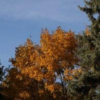 Осень разноцветная :: MPS