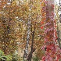 Осень выкрасила городские дворы :: София