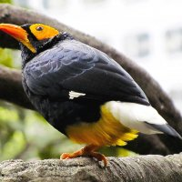 Экзотический птиц :: Лариса Журавлева