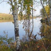Берез желтеющая проседь прохладу осени таит… :: Елена Ярова