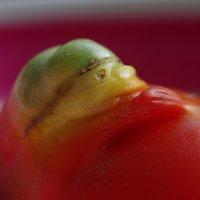 Странный помидор (новый вариант) :: Валерий Талашов