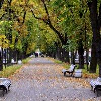 СПБ. Осень... :: Витас Бенета
