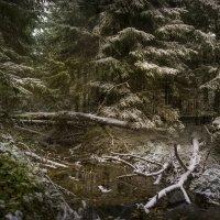 Первый снег :: Алексей Строганов